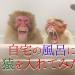 自宅の風呂に猿を入れてみた!